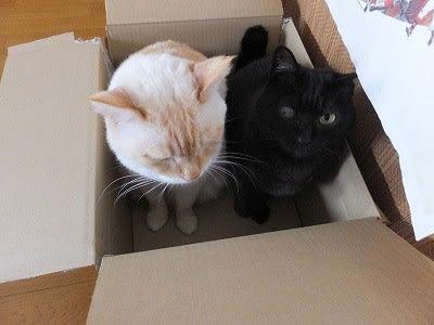 順繰り順繰り~ - ブーヤンと猫の王国