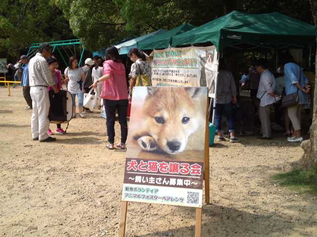 保護 浜松 犬 市