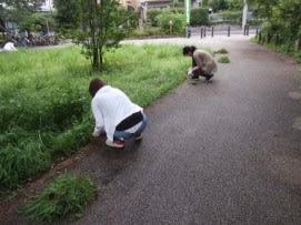 園路の草取り3
