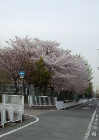 Sakura_2_2