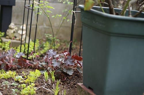 前庭花壇の修正