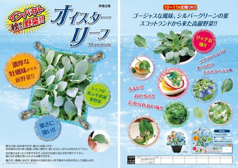 13f_01oyster_leaf1_2