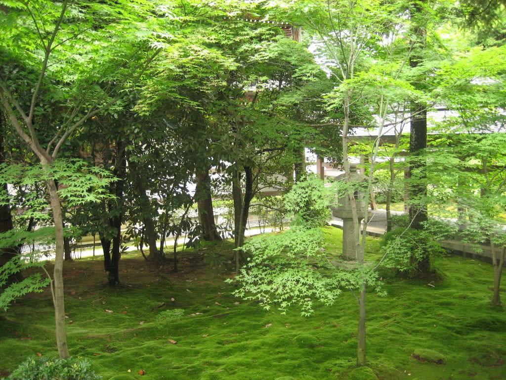 京都壁紙ー緑の森 モバイル 日々雑感