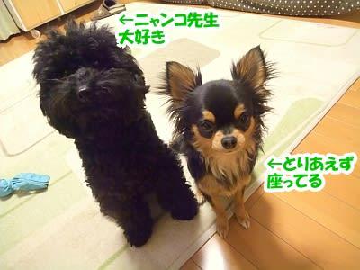 https://blogimg.goo.ne.jp/user_image/65/d8/393d36132a2ff7094b18f8290be22dd2.jpg
