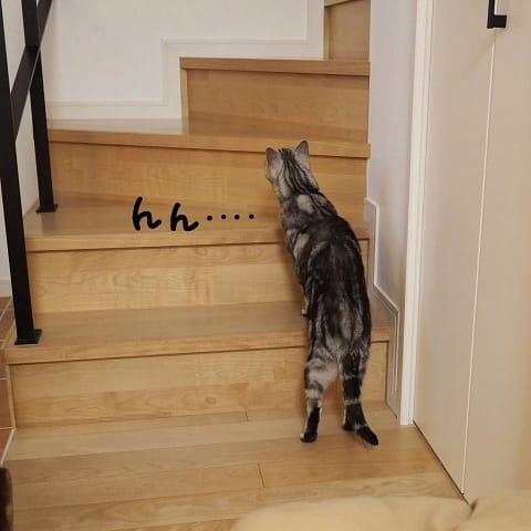 階段。 - でぶアメショと愛の無い生活。