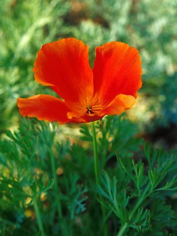 Flower1002_2