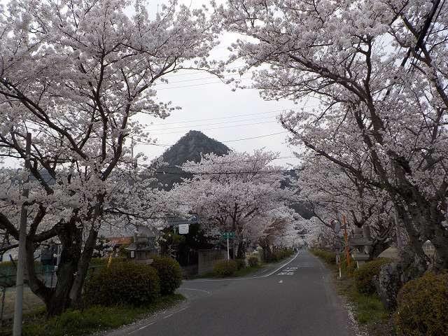 東近江市・太郎坊宮参詣道の桜満開(4/1) - 「ウォーキング三昧 ...