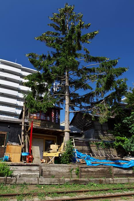 小樽2011夏 -手宮線跡地- - 青空と大地の中で