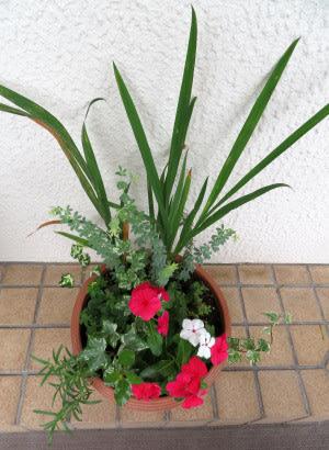 寄せ植え鉢-N