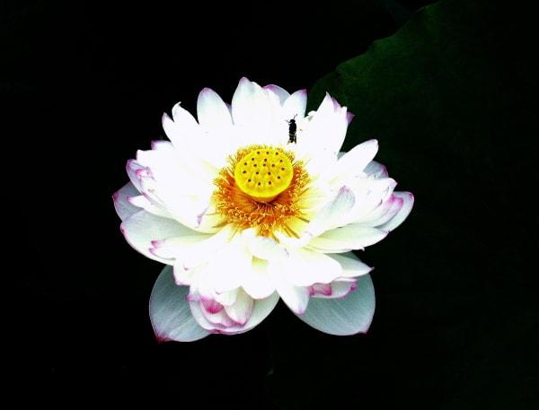 仏恩に報いる 賽仏座 (さいぶつざ)  - 花の公園・俳句 ing