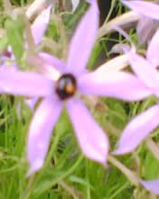 2008_0529_559