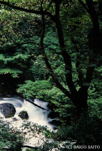 森の奥の清流