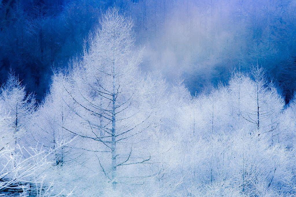 山中湖畔のカラマツ霧氷の写真