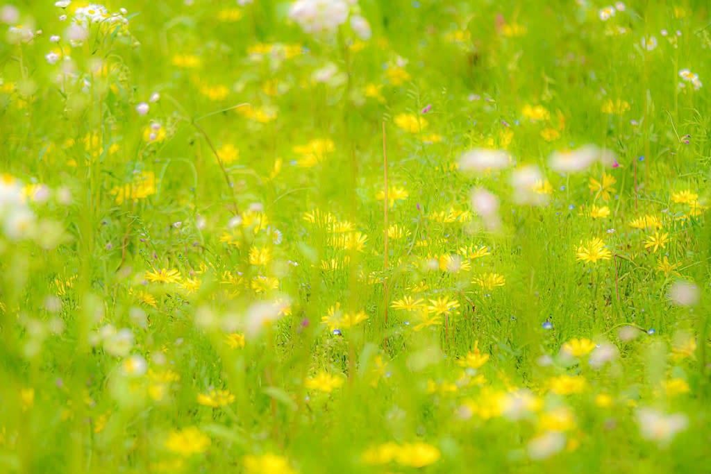 春の野の写真