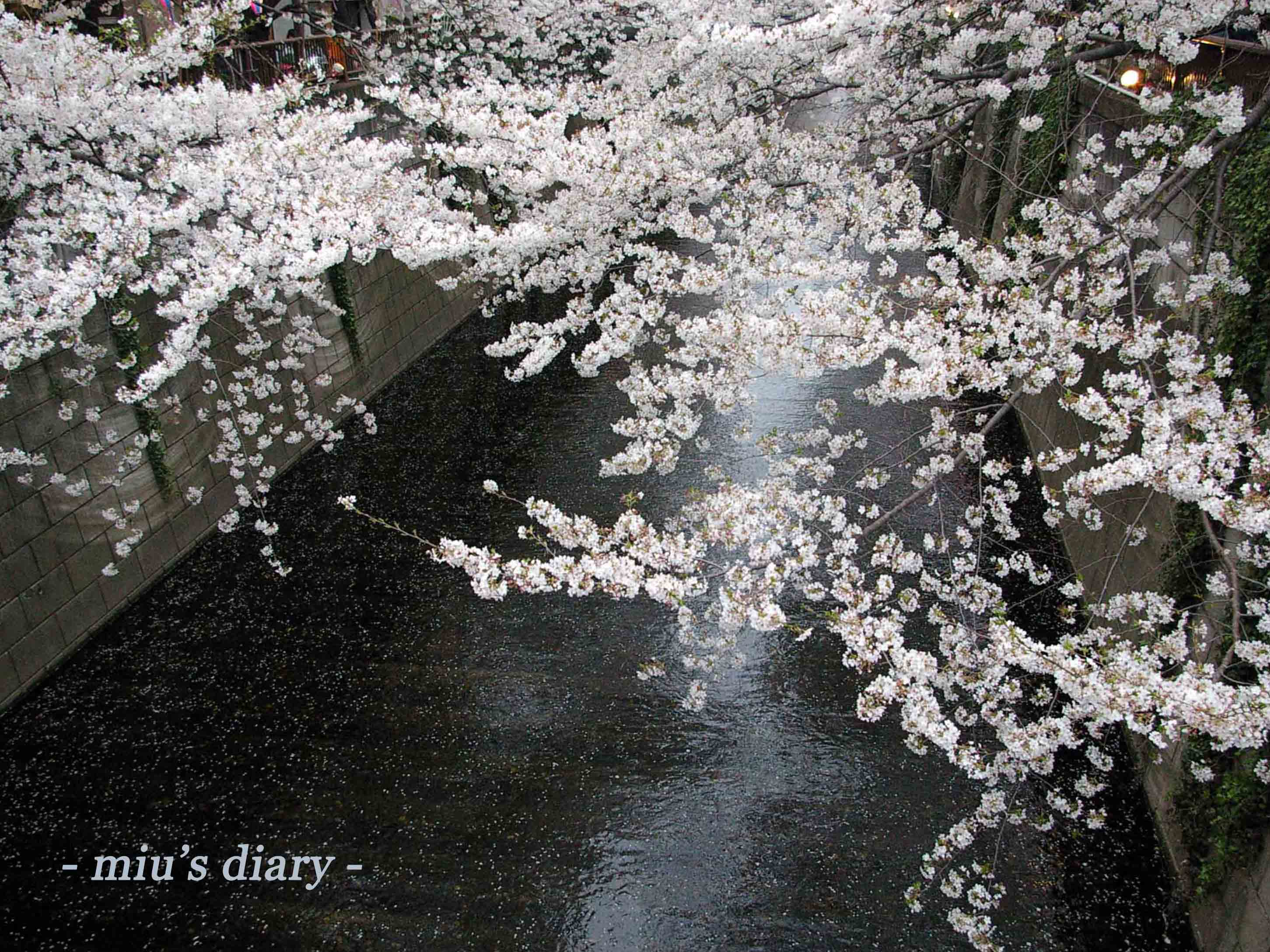 Sakura seasons wallpaper mius diary voltagebd Choice Image