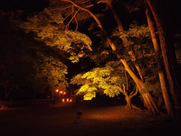 写真説明=ライトアップの風景(4)