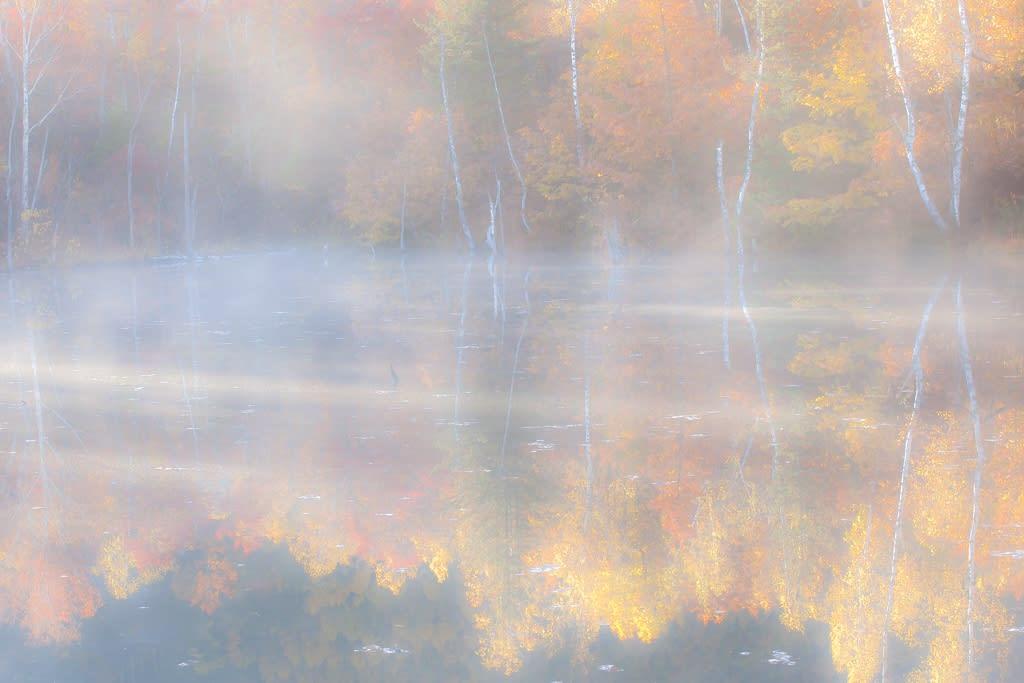 まいめ池の紅葉の写真
