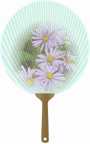 ボルドー菊の団扇