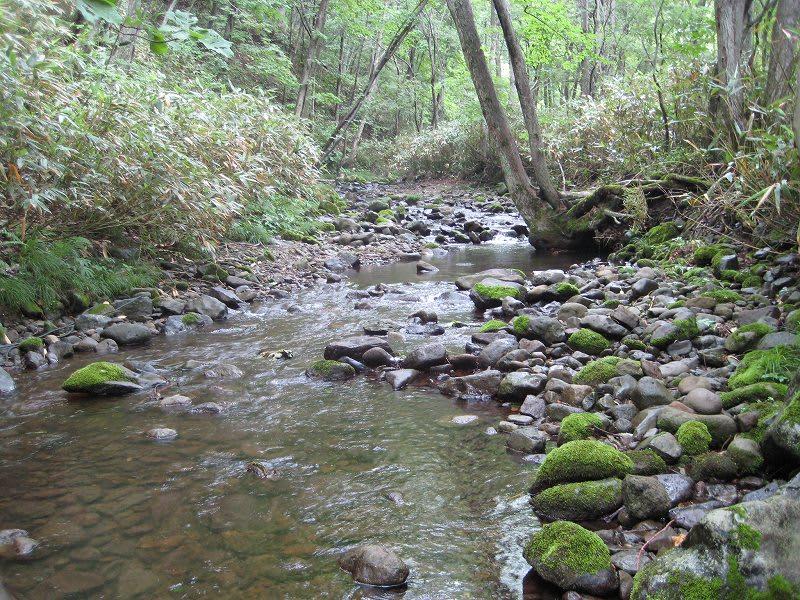 中の沢川 - 渓流IN北海道