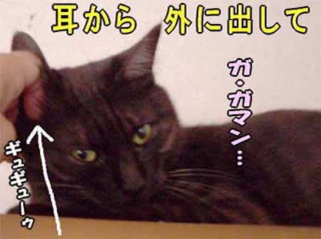 ネコとおしゃべり~「おじしゃま事件です」旧館~