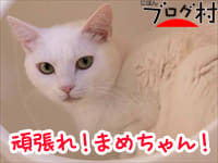 にほんブログ村 猫ブログ 完全室内飼