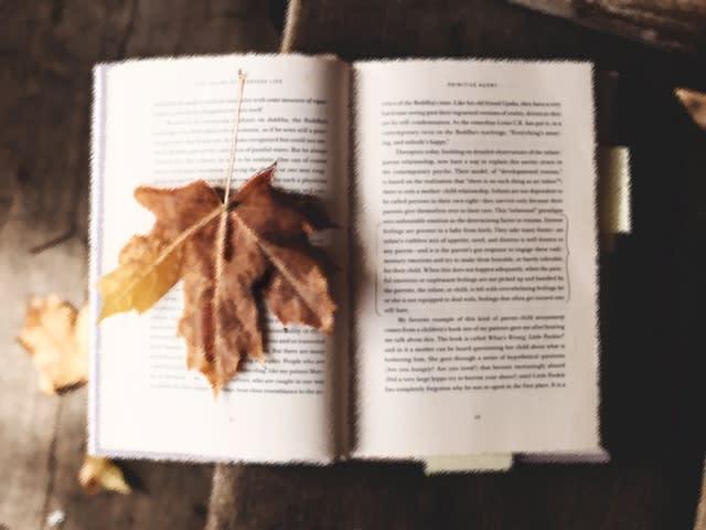 落ち葉と本