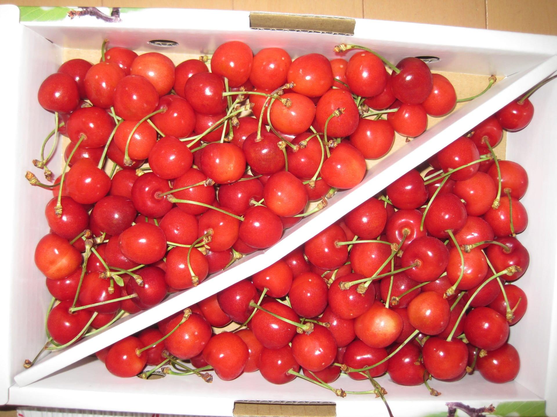 ポポーガーデンくらぶ  森のカスタードプリン??噂の珍果、ポポーを21品種栽培し、品種間の違いを地味に研究中です!
