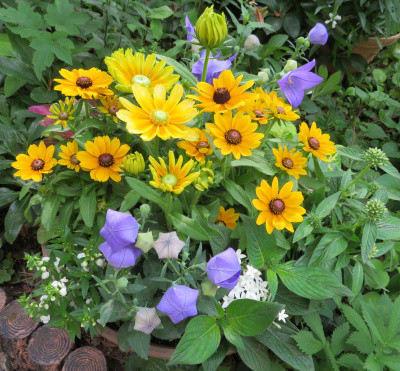 黄色と紫のコントラストが美しい寄せ植え鉢