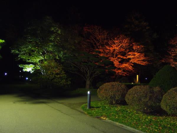 写真説明=ライトアップの風景(2)