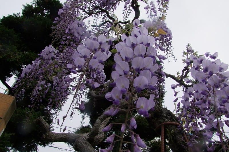 2011_346