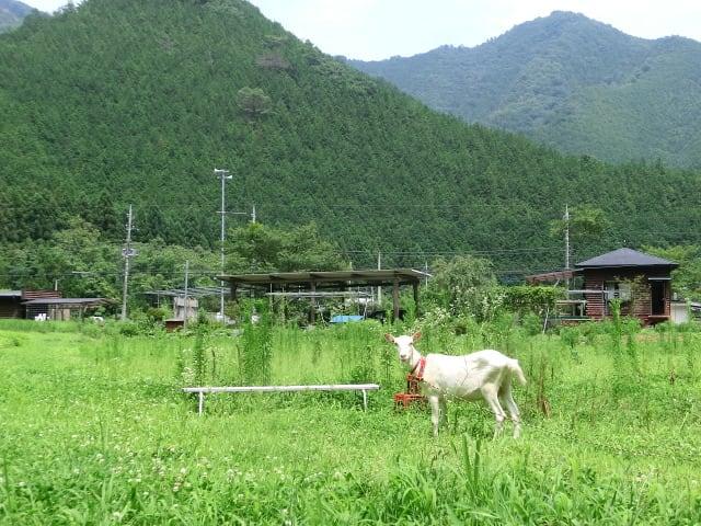 オカリナの里とヤギ