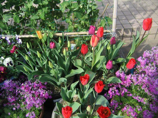 気温が低いので花は長持ち?