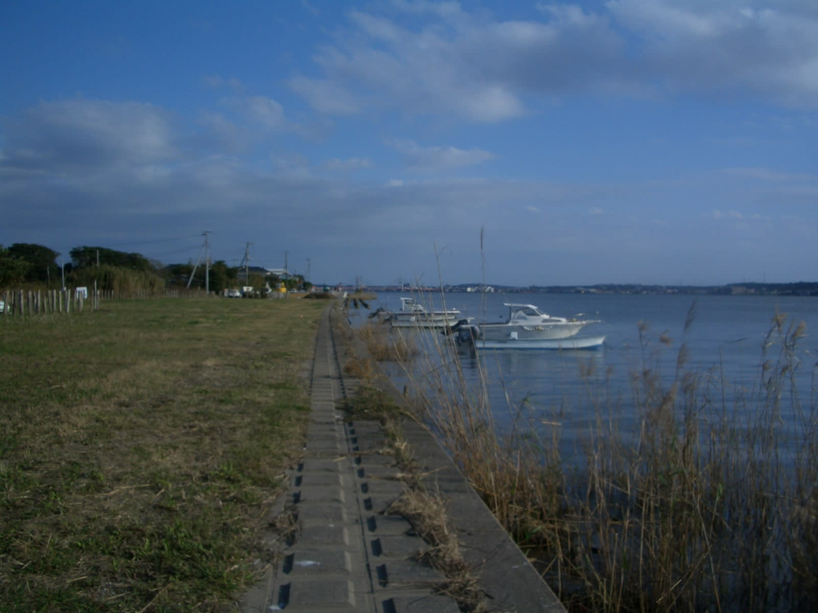 利根川のハゼ釣り - 小見川 高橋つり具 ブログ