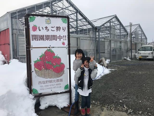 富山 いちご 狩り