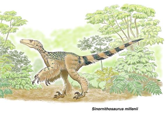 シノルニトサウルス1 - 肉食の系...