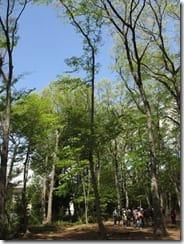 ④枯損木伐採で生じた空間を観察