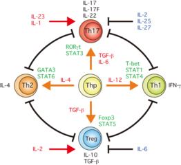V(D)J遺伝子再構成 - V(D)J遺伝子再構成の概要 - …