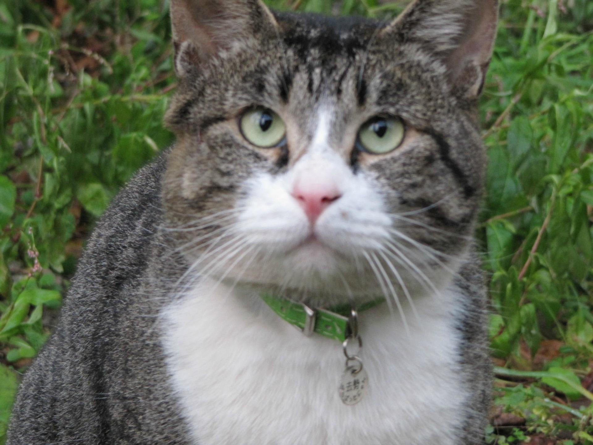 公園にいる野良猫ちゃん - 気まぐれアルバム - Yahoo!ブログ