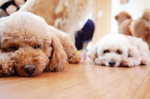 かわいい犬猫写真のフリー素材(商用利用可能) - オドフラン ~いつも ...