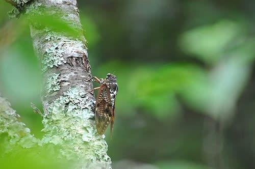 閑 さや 岩 に しみ入る 蝉 の 声 意味