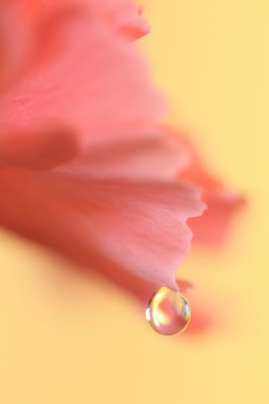 Carna_pink