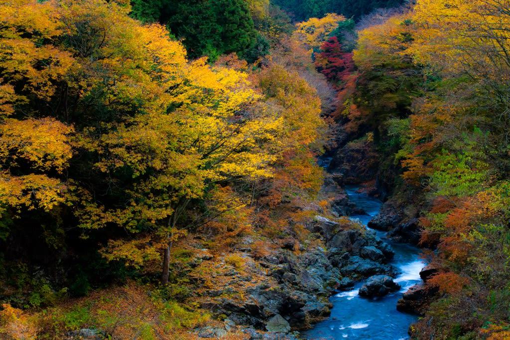 秋川渓谷の紅葉の写真