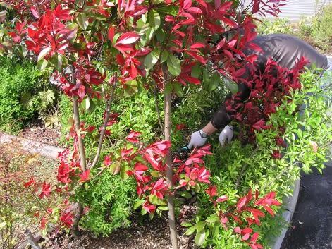 ふるさとの森づくり」育樹祭