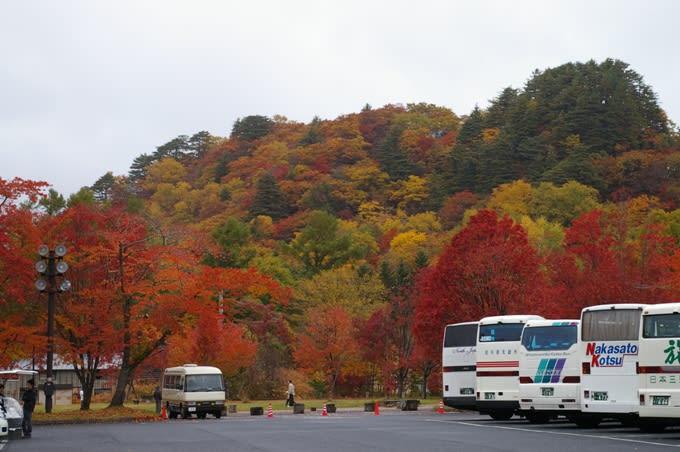 十和田湖の自然  ~ゆらゆら日誌~