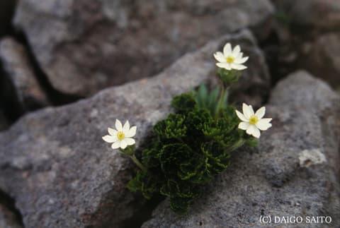花寄り添い