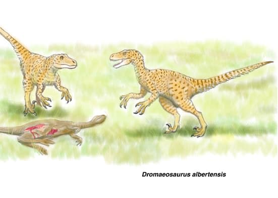 ドロマエオサウルス1 - 肉食の系...