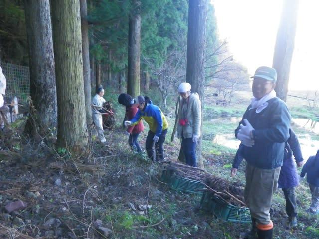 燃し木を集める