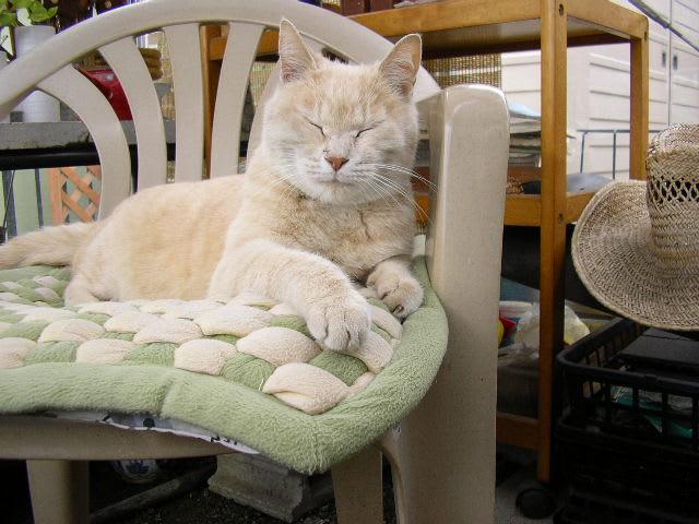 癒しの部屋の仲間たち16・愛する猫の画像