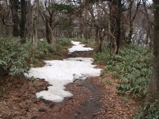 地肌が見えてしまっている場所もある訳で…と言うか、普通に雪があるところだけを出したいですが、誇張でガッカリはさせたくなので事実をきちんと。