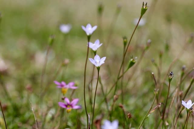 竣成苑の小さい花たち     竹島クラフトセンター - TCC・竹島クラフトセンター TAKE-LOG 竹ログ